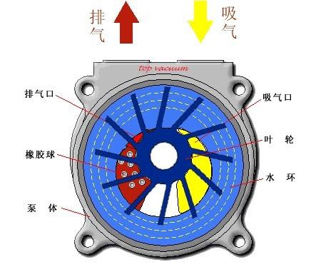 2BV型水环式真空泵及压缩机工作原理图